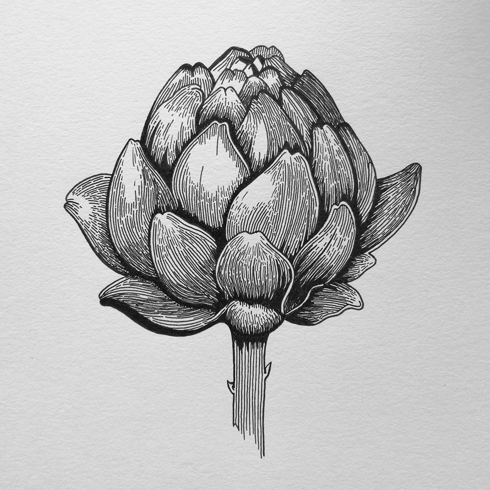 byedel_illustration_artichaud