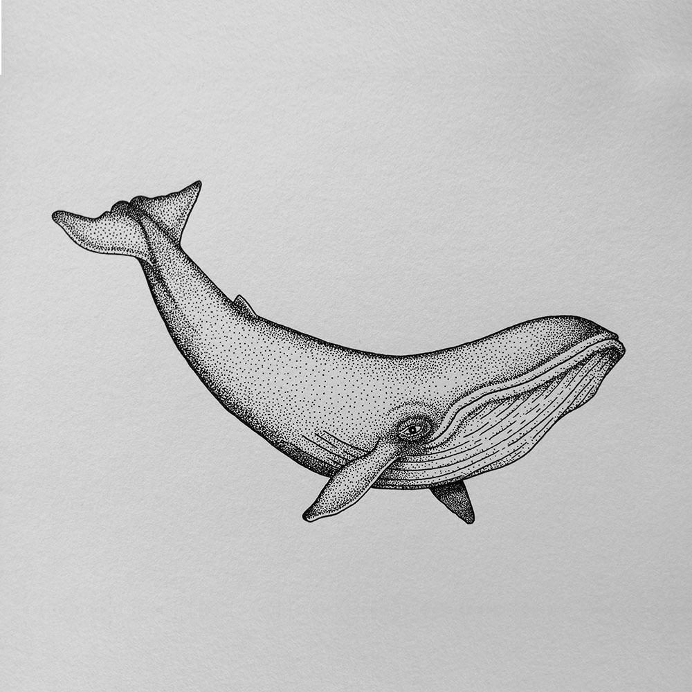byedel_illustration_dot_art_baleine-1
